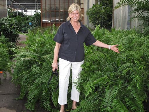 This fern is called macho fern because of its large size. It's like an overgrown…