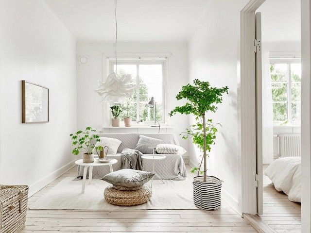 Simple living space with a IKEA pendant light, a gray sofa, and a indoor tree