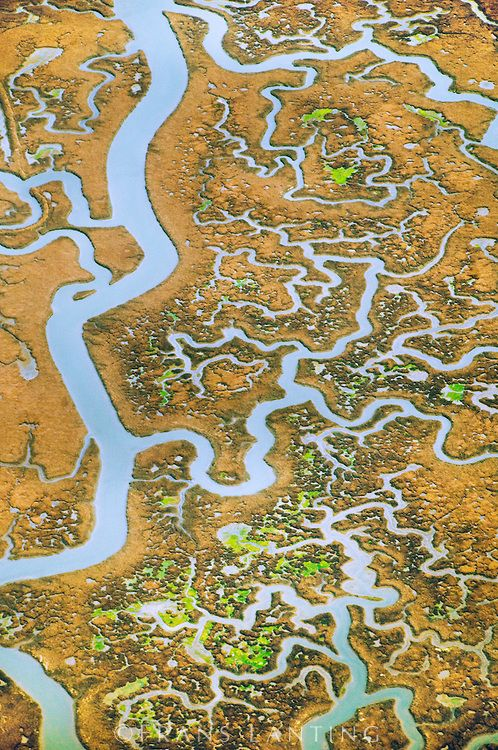 Tidal creeks in salt marsh, Elkhorn Slough (aerial), Monterey Bay, California, Frans Lanting