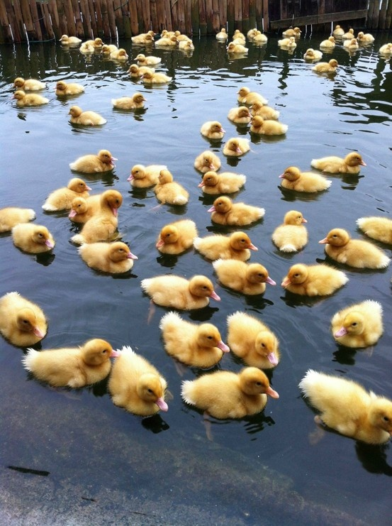 Duck duck, duck ,duck - Click image to find more Humor Pinterest pins