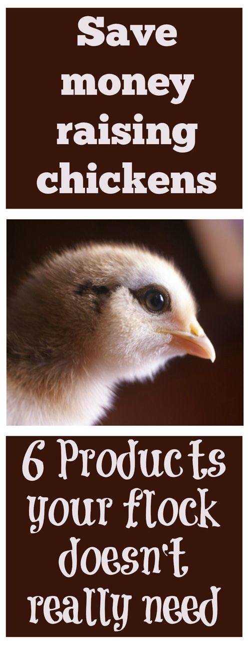 Save money raising chickens: 6 products your flock doesn't really need