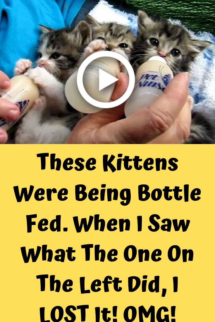 These Kittens Were Being Bottle Fed When I Saw What The One On The Left Did I Lost It Omg Kittens Bottle Feeding Cute Birds