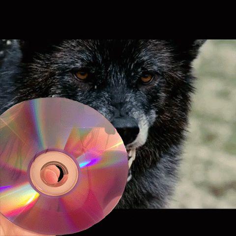 Wolf/loup