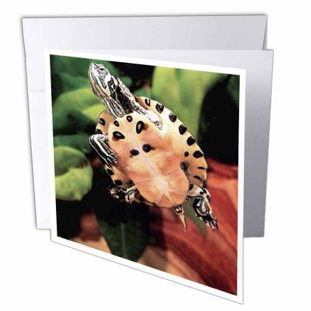3dRose Yellow Belly Turtle - NA02 DNO0534 - David Northcott, Greeting Cards, 6 x 6 inches, set of 6
