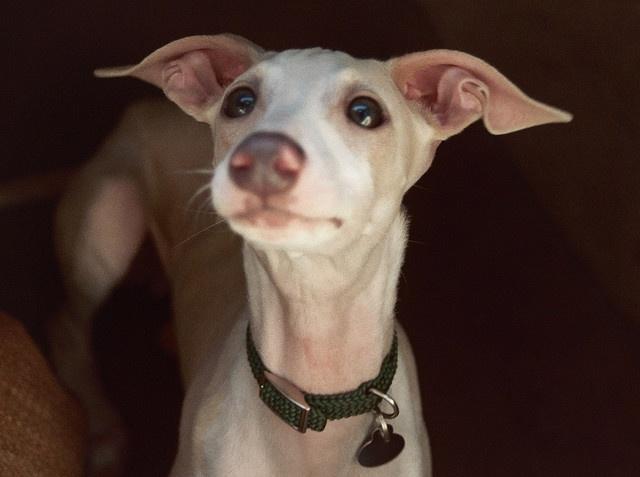 Dogs on Pinterest ...