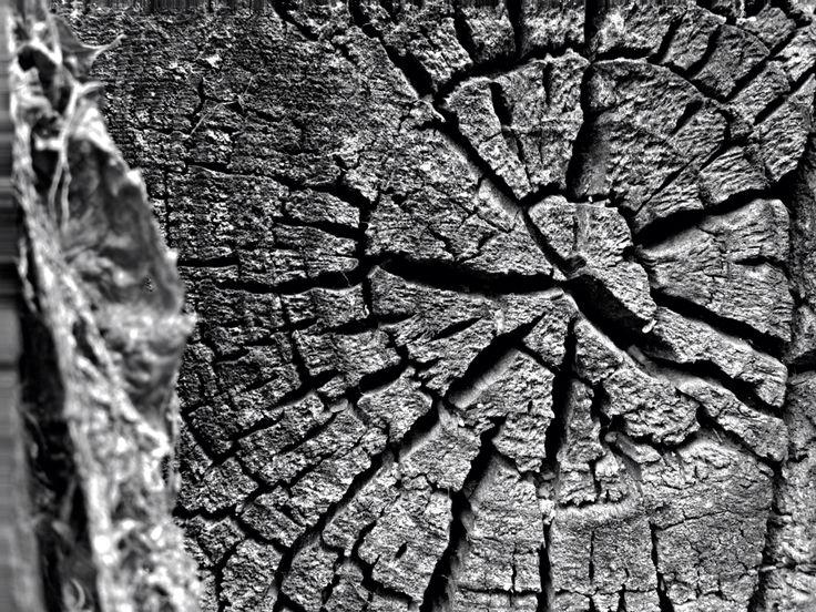 Wood Photography  facebook.com/mbgalleria