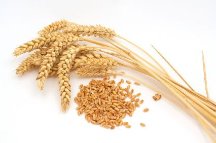 Warenkunde Mehlsorten