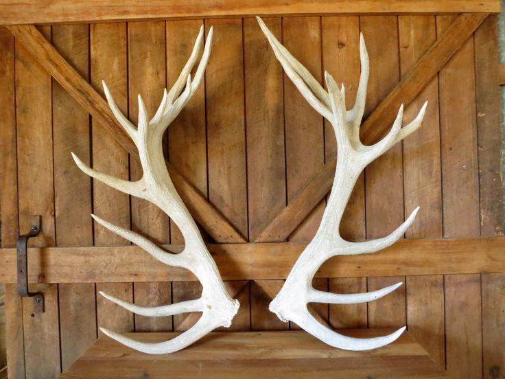 Antlers - $30 pair