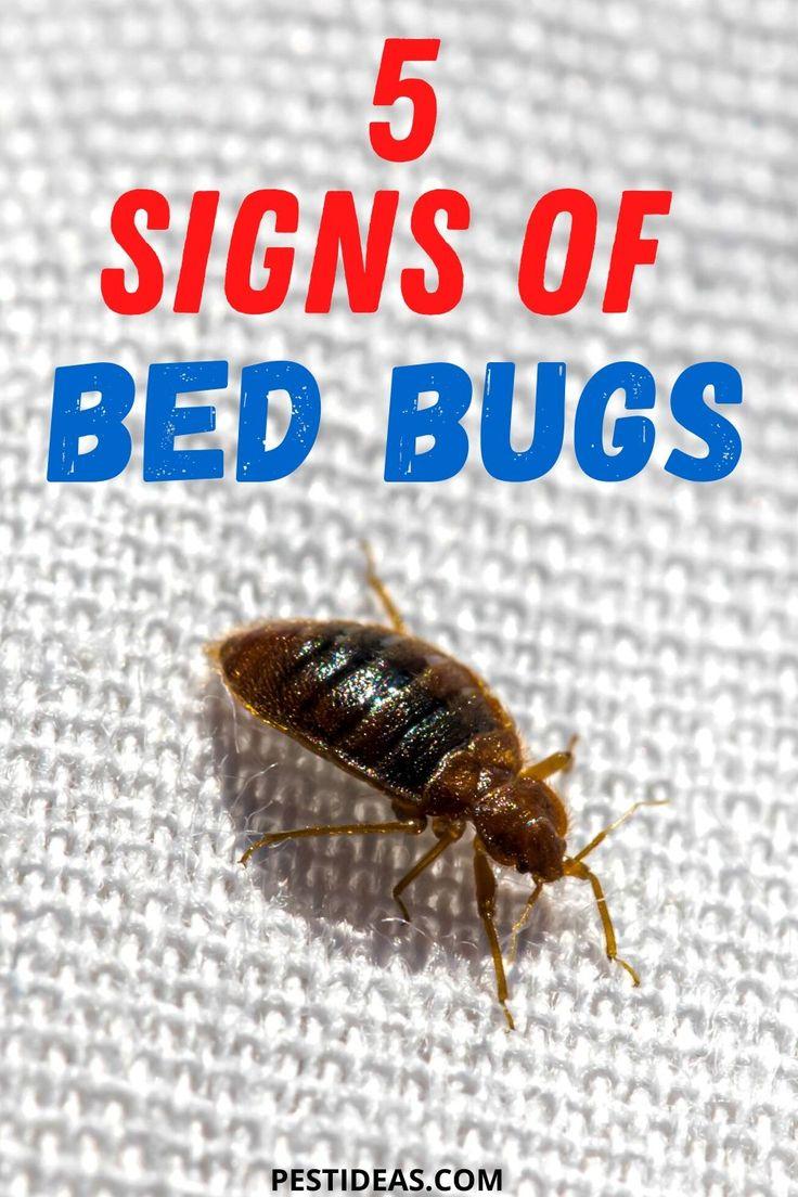 Signs of Bed Bugs in 2020 Signs of bed bugs, Bed bugs