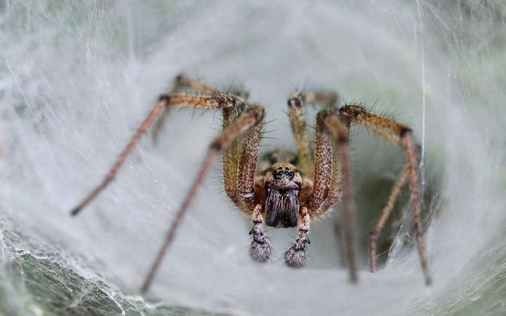 Un composé présent dans le venin d'une araignée mortelle empêcherait la destruction de cellules du cerveau après un accident vasculaire cérébral (AVC). La molécule s'est révélée efficace chez des...