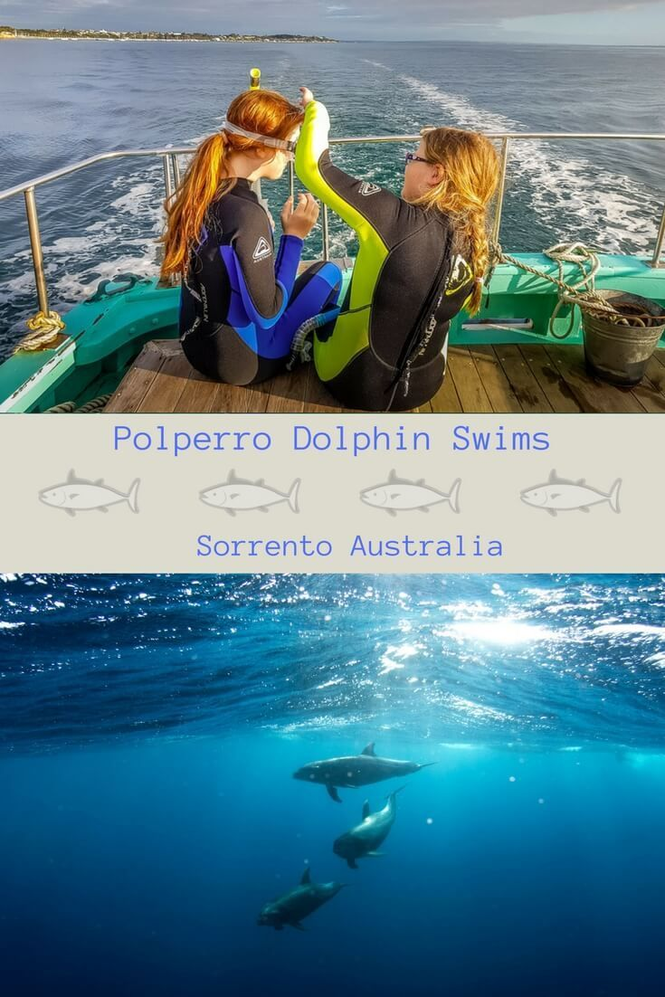 Wildlife and conservation experience all rolled into one. Swim with dolphins and seals of Port Phillip Bay. The team at Polperro Dolphin Swims have spent their whole lives working on Port Phillip Bay. An amazing experience for the whole family Mornington Peninsula attractions | Sorrento Australia Melbourne | swimming with dolphins | Port Phillip Bay Melbourne  #dolphins #seals #wildlife #familytravel #travelblogger #melbourne