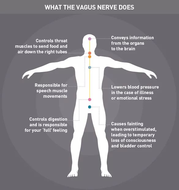 The vagus nerve is the longest nerve of the autonomic nervous system, which influences the function of internal organs.