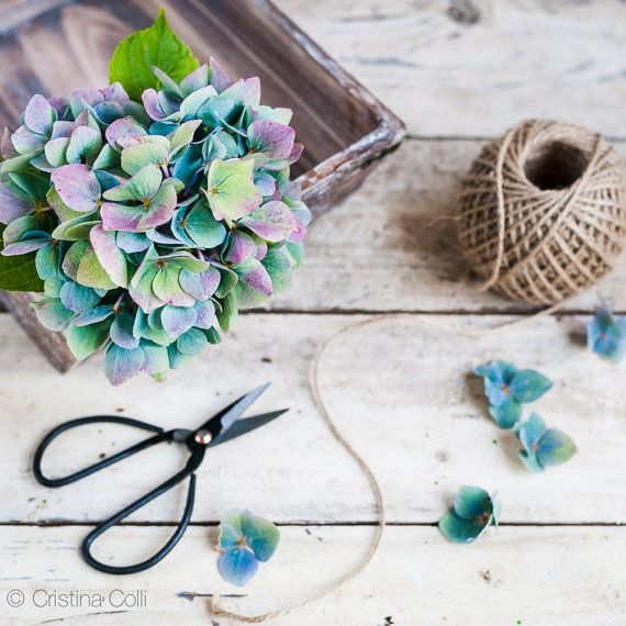 Floral still life photography - Faded blue & purple hydrangea, scissors & twine on distressed wood - Feminine romantic Autumn wall art - Home decor Giclée print    available in my Etsy shop - Photography & Styling by Cristina Colli