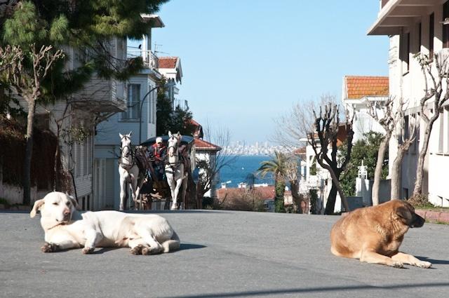 Prince Island in Turkey.