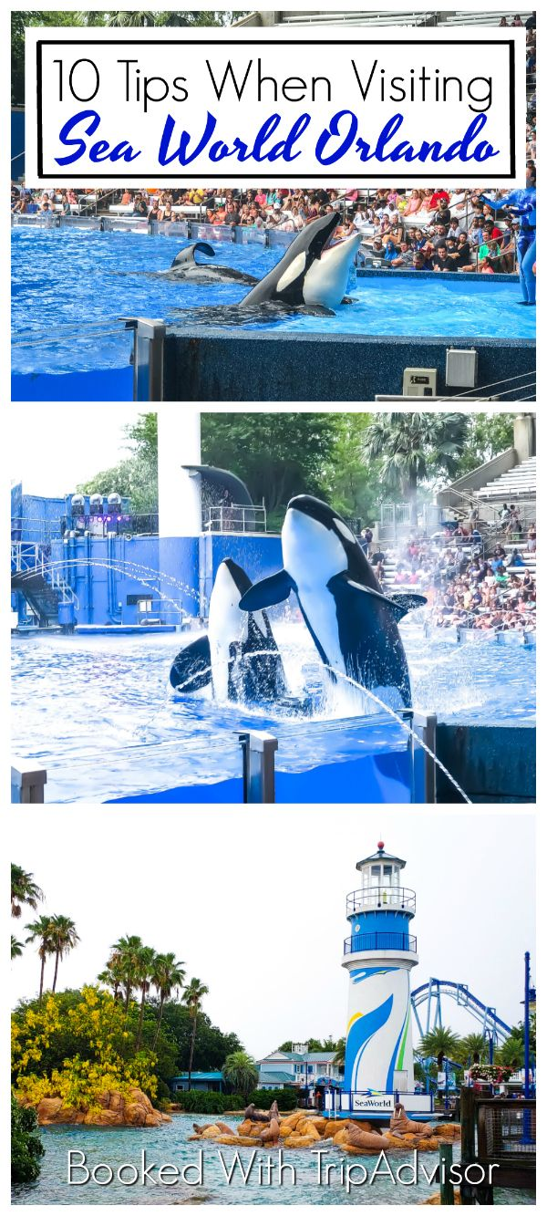 10 top expert tips when visiting sea world orlando with family rh pinterest com