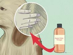 Imagen titulada Make a Natural Flea and Tick Remedy with Apple Cider Vinegar Step 3