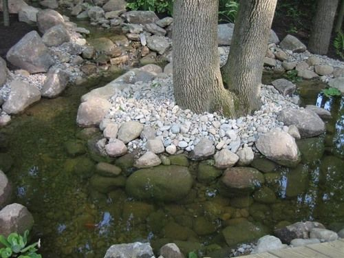 Coy Pond Around Tree Water Features Pinterest Ponds