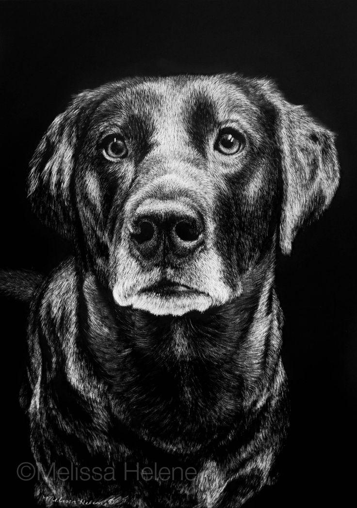 Brenna   Melissa Helene Fine Arts + Photography 5x7 scratchboard www.melissahelene.com #artwork #art #petportrait #portrait #dog #blackandwhite #commission #melissahelenefinearts #scratchboard #scratchart