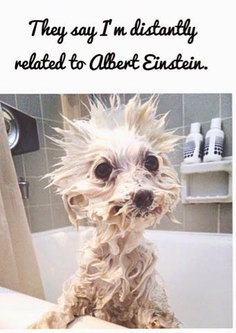 PUPPY LOVE: They say I'm distantly related to Albert Einstein....
