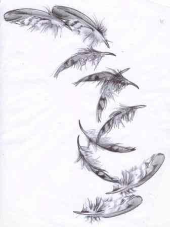 Feather Drawing   Falling Feather Drawing   Feathers ...