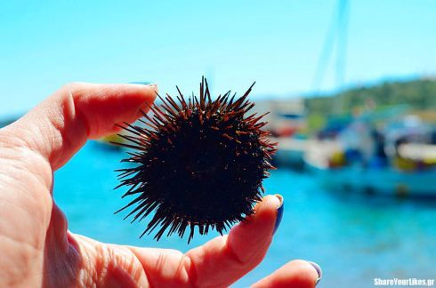 axinos #summer #Greece #sea #urchin