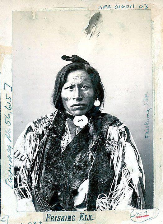 FRISKING ELK , circa 1888