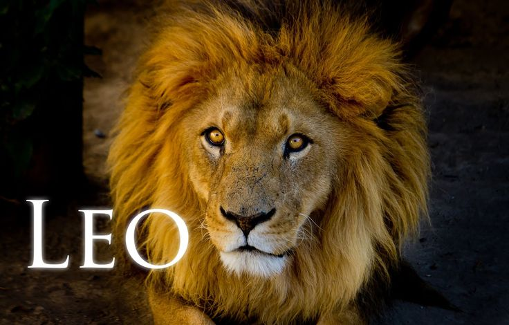 All about Leo with astrologer Michele knight