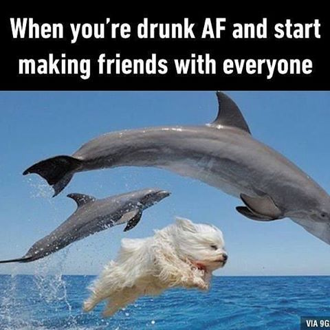 Drunk friends are best friends. #dolphin #drunk #9gag @9gagmobile #tagforlikes #followback #lol