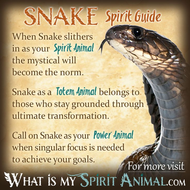 89 Best Animal Totems Guides Images On Pinterest Animal Spirit