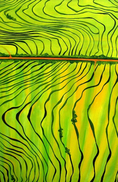 These Mareeba #tea fields look awesome from the air