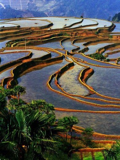 """Cina. Il """"paesaggio culturale"""" delle terrazze di riso dello Honghe Hani."""