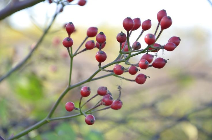 Jesienny spacer #fall #leaves