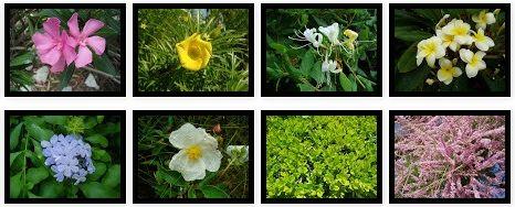 Las 25 mejores ideas sobre de hoja perenne en pinterest for Arbustos perennes para jardin