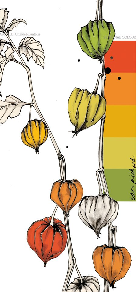 Planet Sam: Colour from the season - Chinese Lantern orange