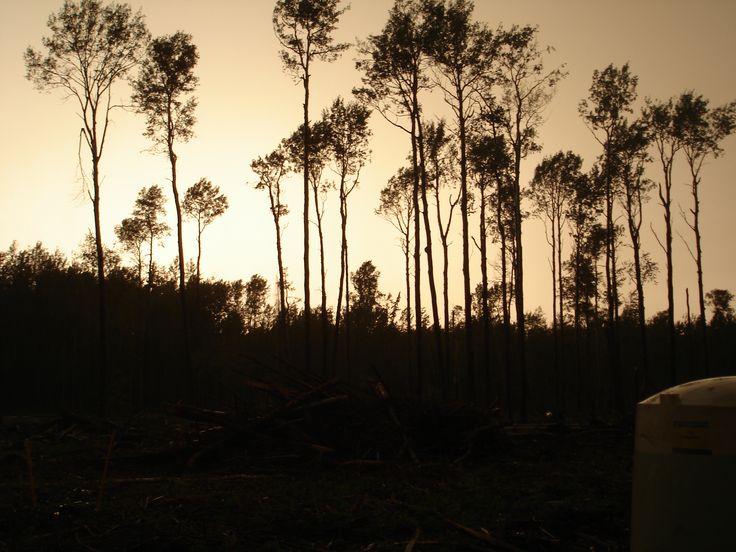 Treeplanting in Alberta. The real slashpiles.  Feeling: Nostalgic