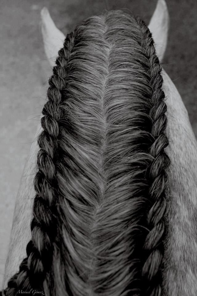 French braided Horse Mane.