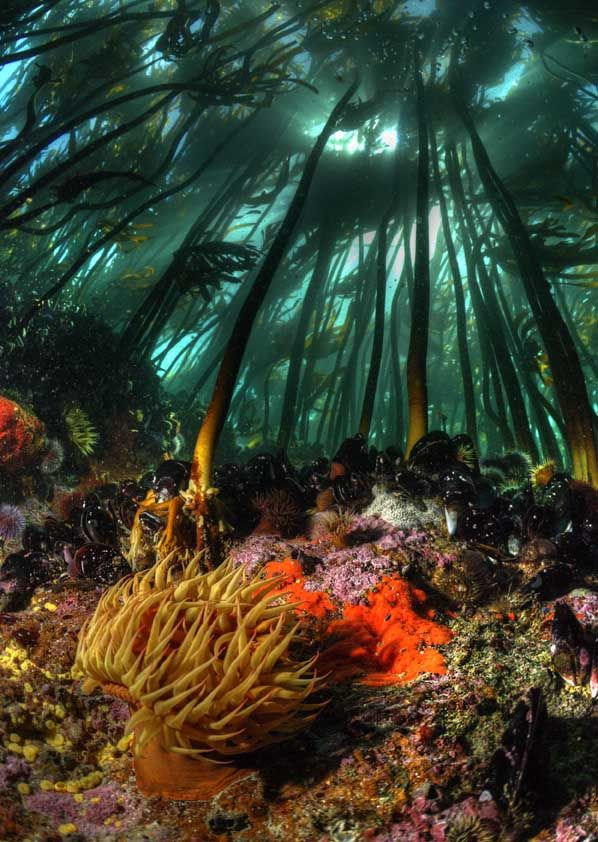 kelp forest - would love to dive there!! And we'd actually be willing to suffer the chilly water!