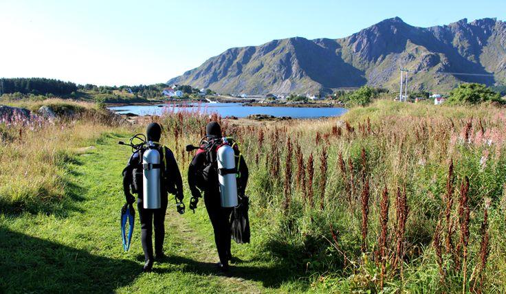 lofoten diving, Norway.