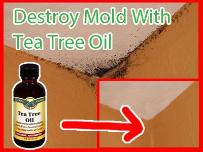 Brilliant home remedy! add oil in water, put it in a spray bottle, voila mold destroyed easily.