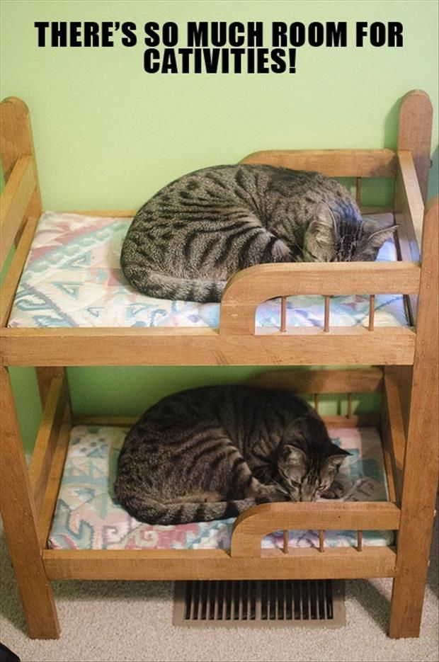 These kitties must be step brothers.  I want this kitty bed!