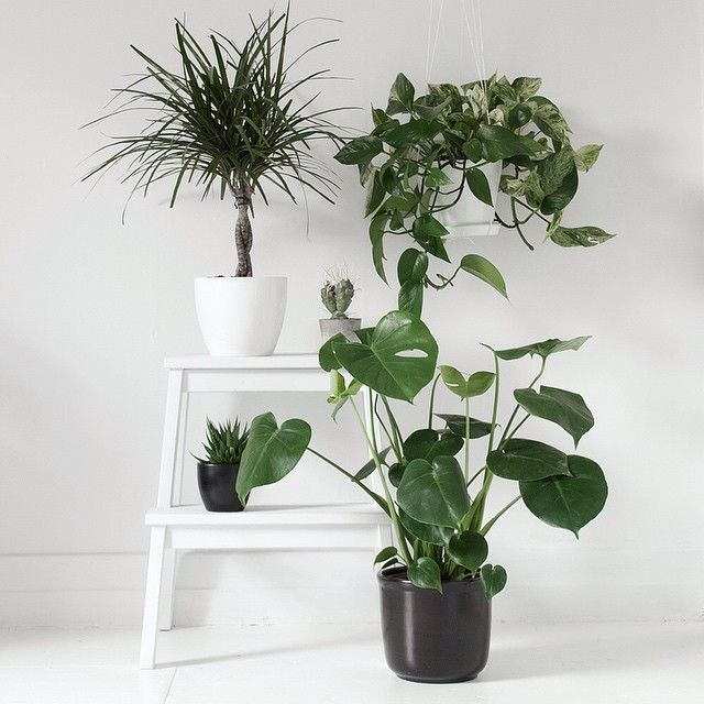 DECORATION WITH PLANTS