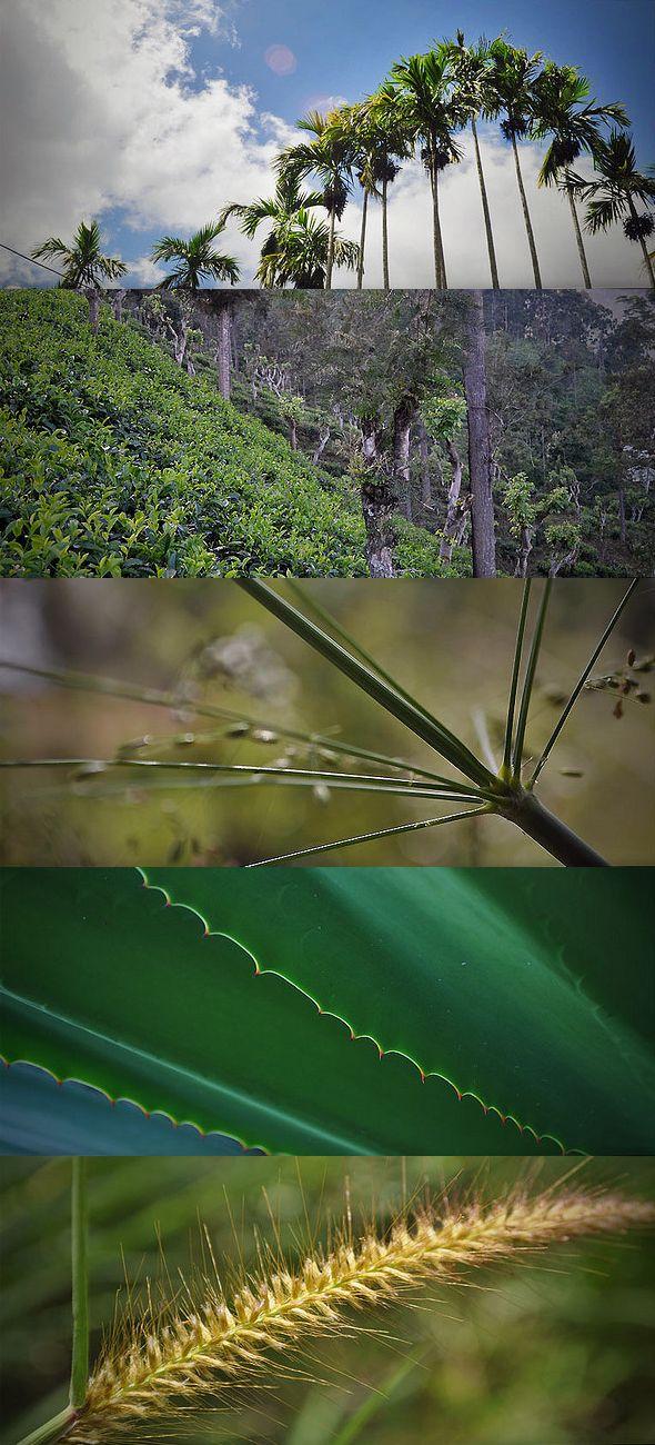 2059 Best Travel Sri Lanka Images On Pinterest Destinations Travel Inspiration And Vacation