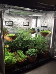 Looking to shop for or assemble your very own indoor garden? Here are seven things to look for when setting up your own indoor grow tent or greenhouse.