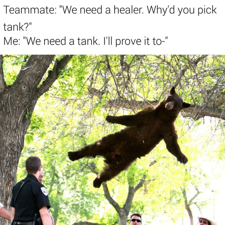 He appears to be right.  #meme #memes #bear #class #lol #overwatch #battlefield #cod #hearthstone #csgo #steam #game #trade #competition #gamer #life #gaming #twitch #love #adventure #nintendo #nintendoswitch #playstation #playstationvr #psvr #xbox #xboxone #vr #vrsports #esports