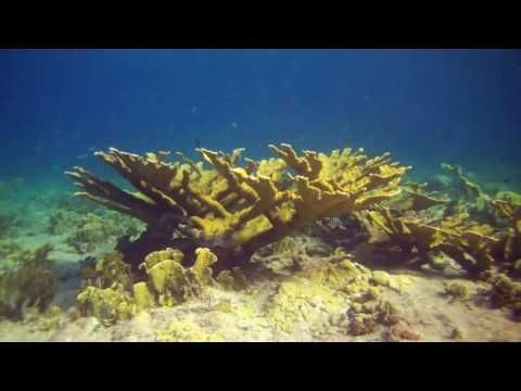 Los científicos saben desde hace mucho tiempo que los arrecifes de coral de todo el mundo se están muriendo y que en el peor de los casos hay animales saluda...