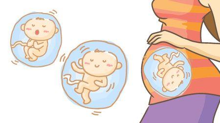 妊娠18週の胎児のイラスト