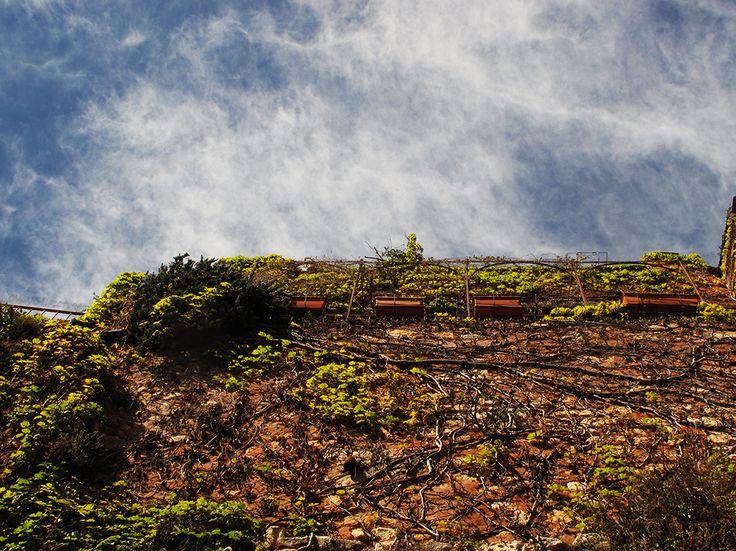 Mur végétal #Luberon #provence