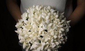 Pretty Stephanotis Wedding Flowers - The Wedding SpecialistsThe Wedding Specialists