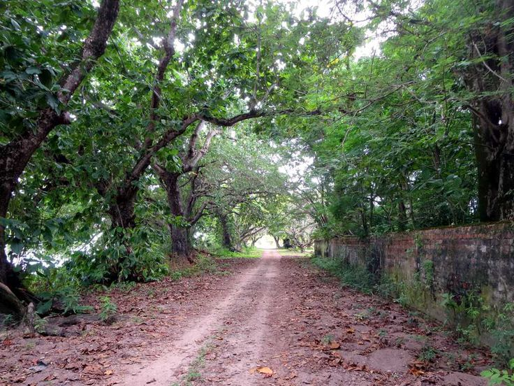 In 1886 Queen Victoria granted the Cocos (Keeling) Islands to the Clunies-Ross family in perpetuity. This road leads to their former residence on Home Island.