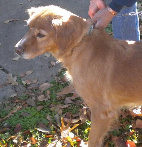 Fiona, Rebecca's dog